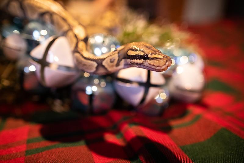 ChristmasSnakes19_0024.jpg