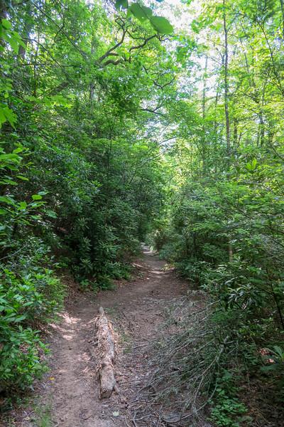 Bradley Creek Trail -- 2,420'
