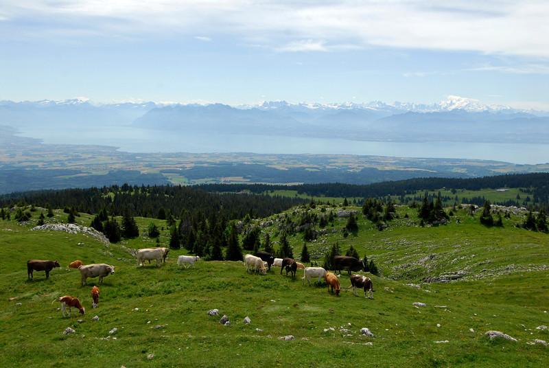 070626 7273 Switzerland - Geneva - Downtown Hiking Nyon David _E _L ~E ~L.JPG