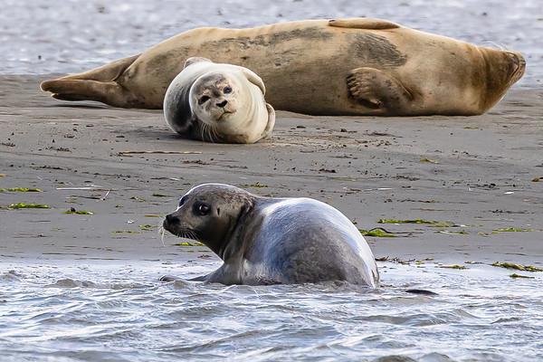 Nature 2021 Wadden Sea