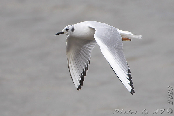 Birding 2008 April