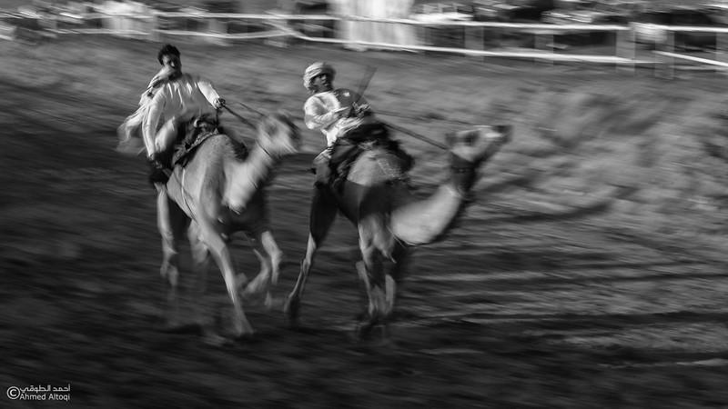 IMGL2413 copy-camels- B&W.jpg