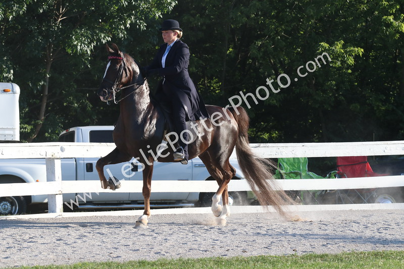 Class 7: Bluegrass Select Series American Saddlebred Three-Gaited Show Pleasure