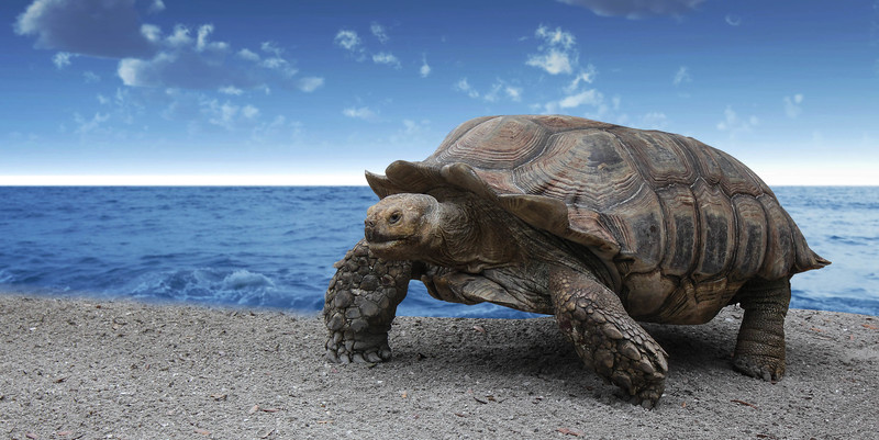 tortue-orlando-2.jpg