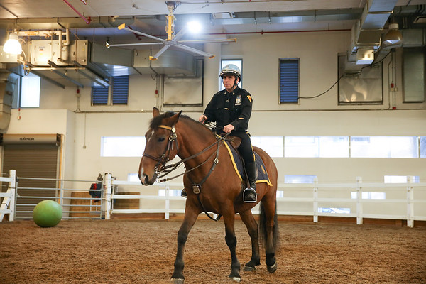 January | Scouts Visit the NYPD Mounted Unit