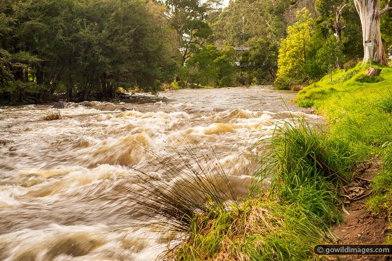 Yarra Flood