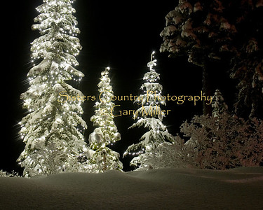 Winter Favorites 2008