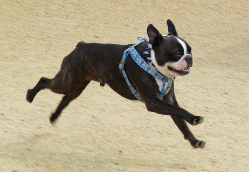 Bounding at the dog park