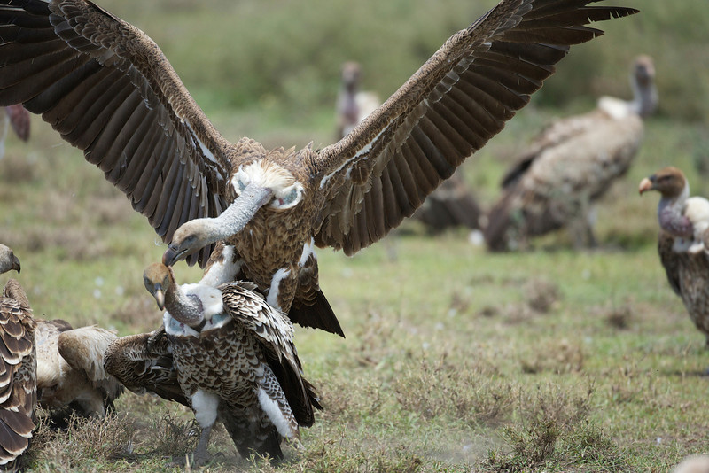 Serengeti_Feb_2013_FH0T6792.tiff.jpg