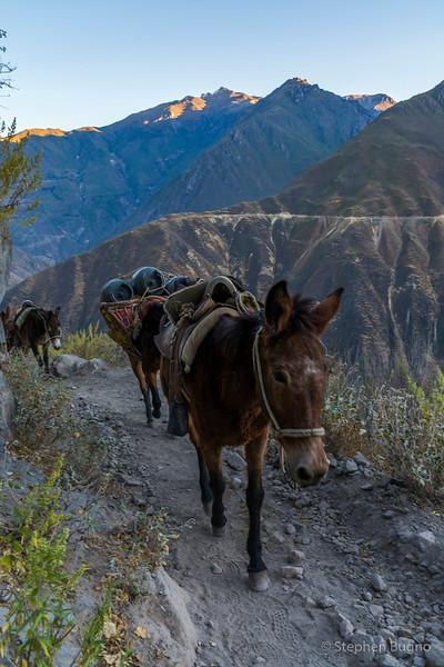 Colca Canyon-1331.jpg
