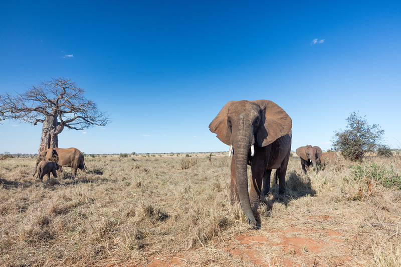 Africa - 102016 - 7867.jpg