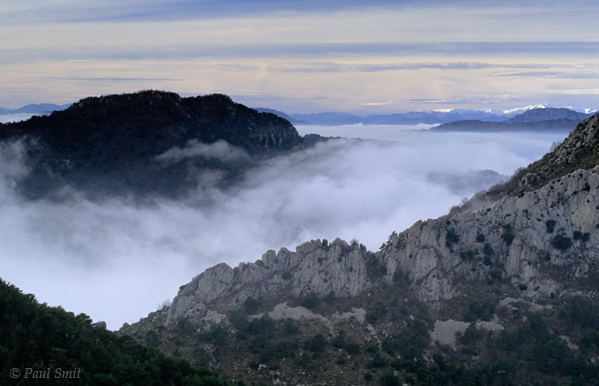 [FRANCE.COTEDAZUR 2748]  'Islands in the clouds.'  Crossing the border back into France from Torri in Liguria suddenly I walk above the clouds. Mountain tops and pine forests perch above the undulating cotton-wool clouds like islands, as serene as a Chinese painting. In the distance the snowcapped Alps of Mercantour. Photo Paul Smit.