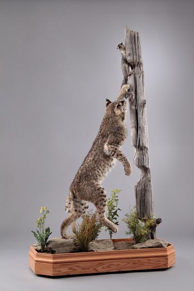 Life-size Bobcat Mount Anderson Taxidermy & Guide Service, Inc.  www.THEHUNTPRO.com