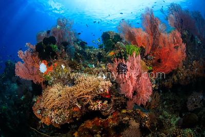 Indonesia - Banka Island 印尼 - 邦卡島