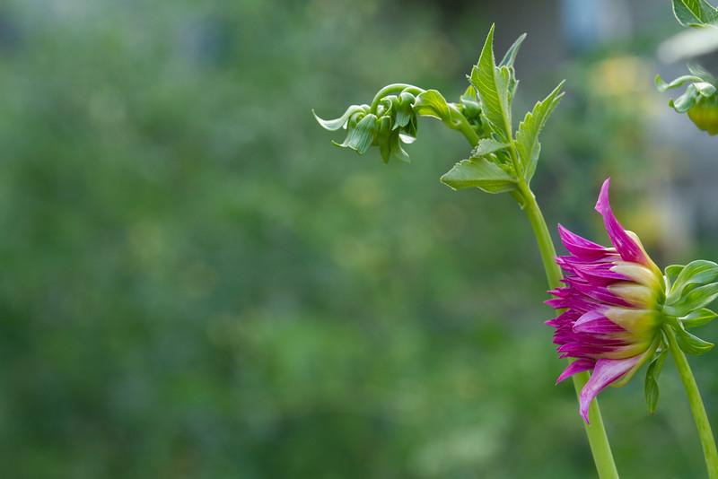 flowers 2015-3563.jpg