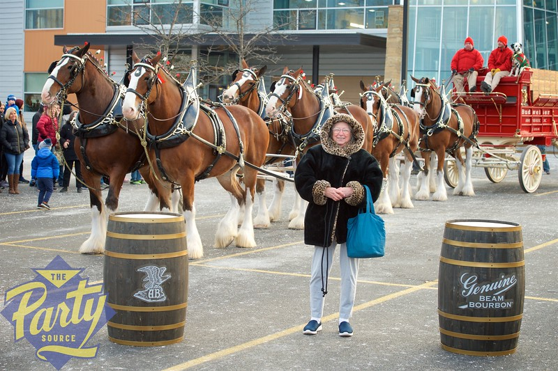 Clydesdale Portraits 166.jpg