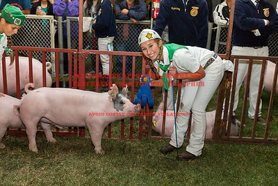 2016 Citrus Fair - Swine