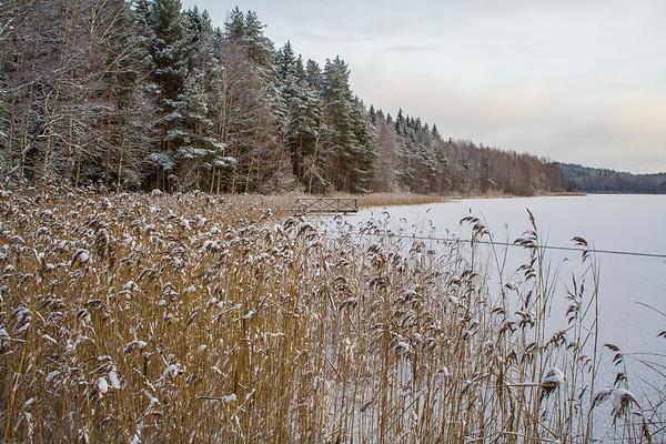 Talvi, Winter