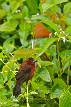 Trinidad & Tobago Wildlife