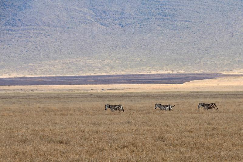 Zebras-scape-02.jpg