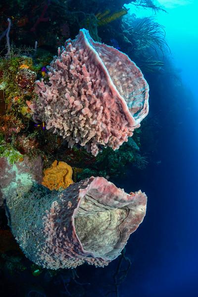 Lighthouse Reef, Belize.