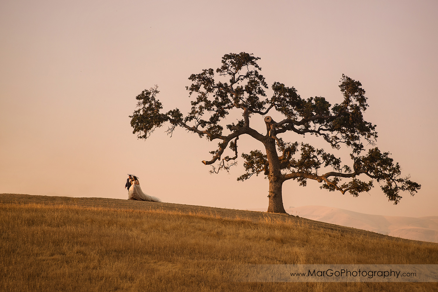 romantic shot of bride and groom walking on the hill with big lonely oak during sunset at Taber Ranch Vineyards
