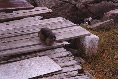 Zermatt21a.jpg