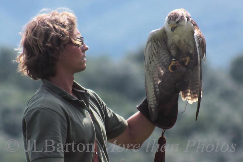 "Hawk / Buzzard Buteo buteo - Europe ""Buzzard"", N.A. ""Hawk"""