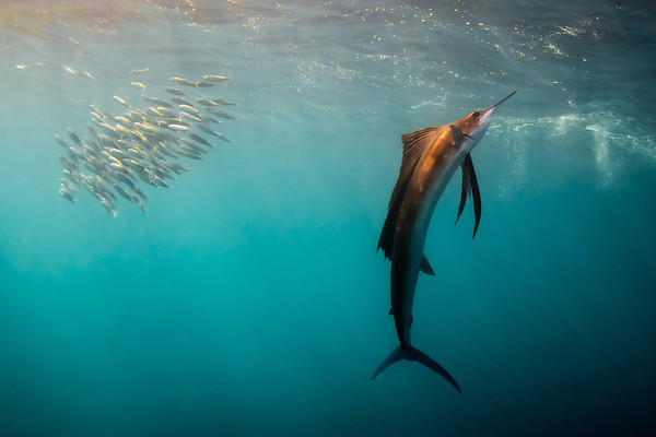 Sailfish and Cenotes