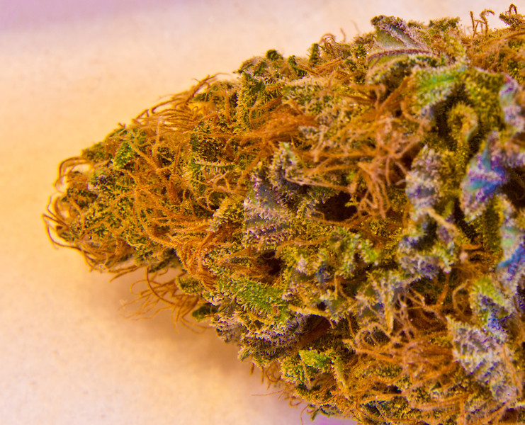 Purple Hash Plant