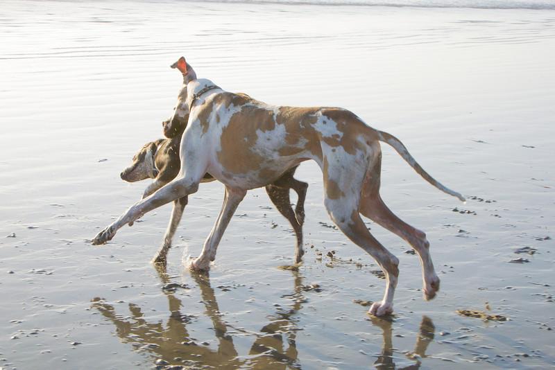 dogs_beach-50.jpg