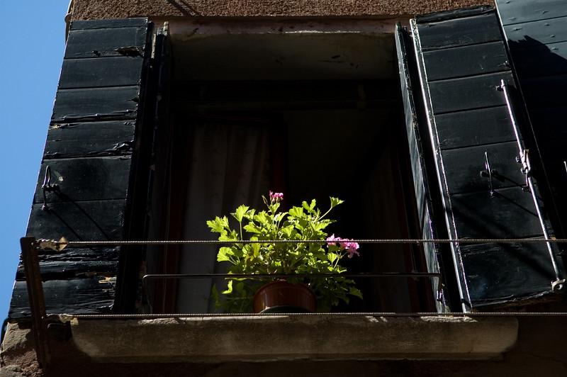 Flowerpot on a window, Venice, Italy