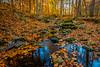 Thistle Creek #1