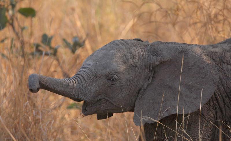 Elephant - 1702.jpg