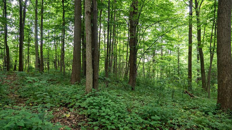 Ontario-Brampton-Claireville-Conservation-Area11.jpg