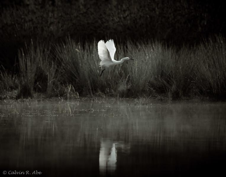 Egret Moment-4.jpg