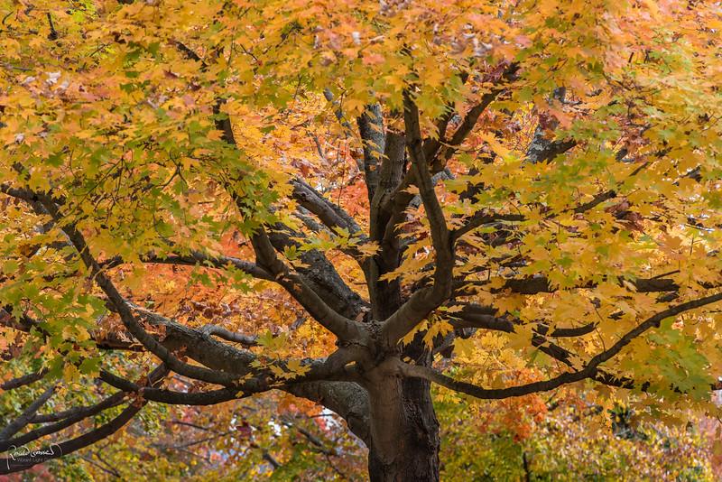 2012-10-27 at 08-52-56.jpg