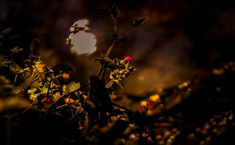 The Magic of Light-416.jpg