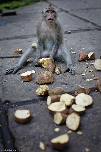 Monkey Forest Sanctuary, Ubud, Bali