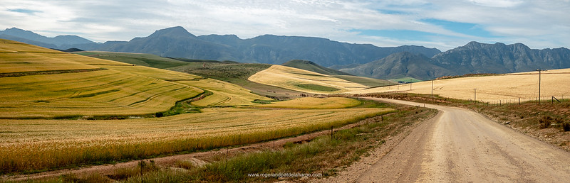 Wheatfields and the Riviersonderend Mountains as you pull up the Dwarsberg Pass.