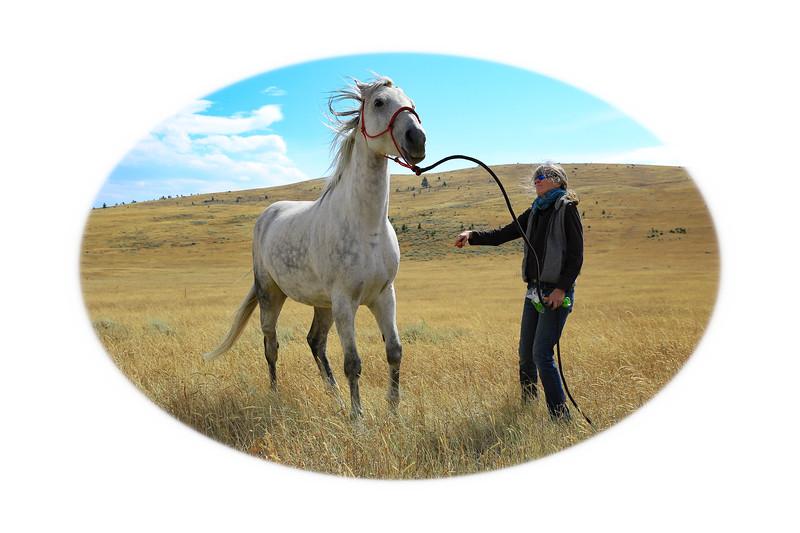 Horses 42.jpg