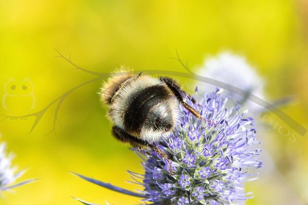 Pollinators on purple