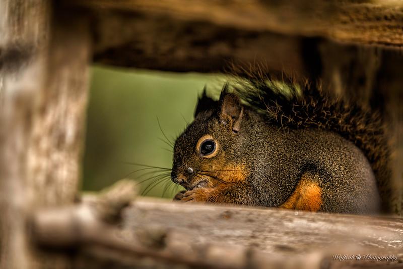 Squirrel -40.jpg