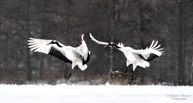 Dancin in the Snow