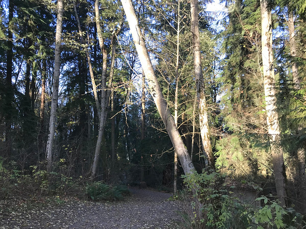 Burnaby Mountain Conservation Area