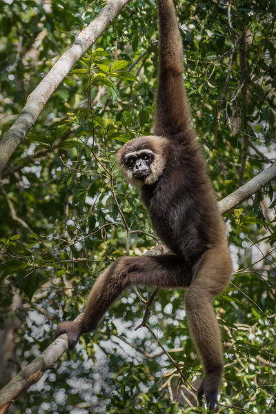 Borneo-2253.jpg