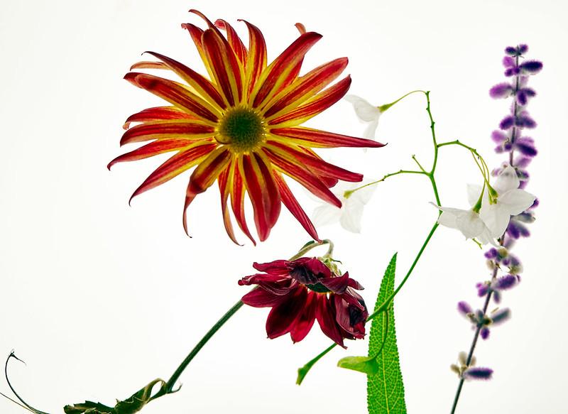 Flower_71I8607.jpg