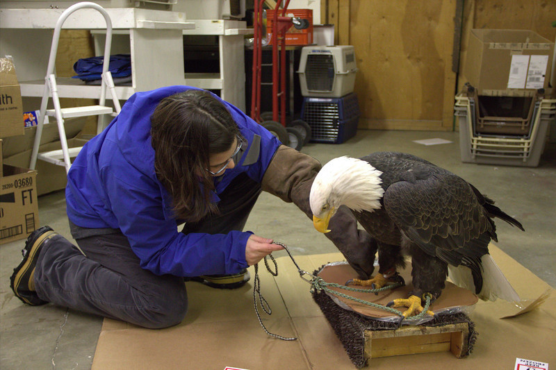 Lets press those talons down in that clay.