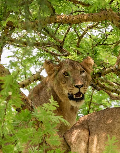 Uganda_T_QE-1402.jpg