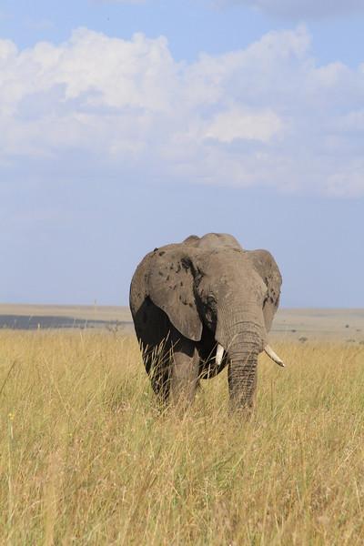 Kenya Part2 '15 025.JPG